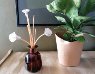Karoo – our newest fragrance
